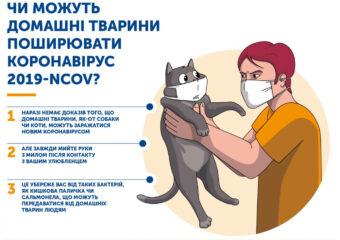 Чи можуть домашні тварини поширювати коронавірус 2019-NCOV?